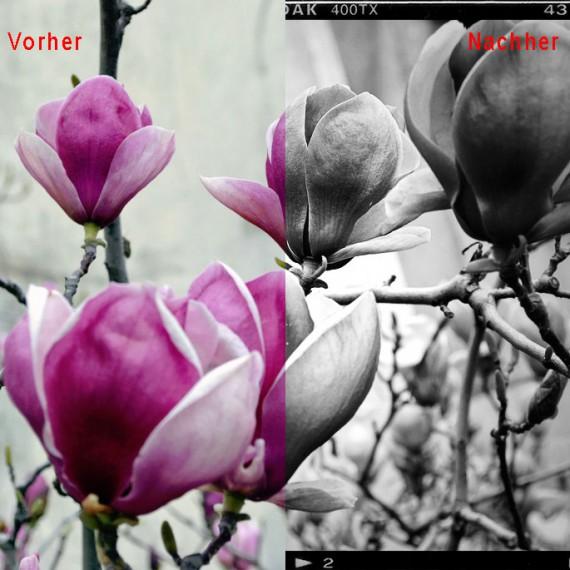 Tutorial_Holga-Effekt_Photoshop_Vorher_Nachher
