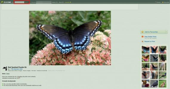 Informationen zur deviantART Bilddatenbank