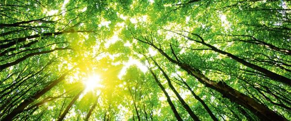 Klimaneutral Drucken und CO<sub>2</sub>-Emissionen mit Printmedien von SAXOPRINT ausgleichen