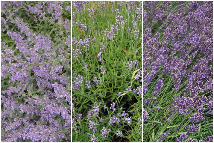 Pflanzen Texturen aus Blumen, Moos, Blatt, Baum und Gras (1)