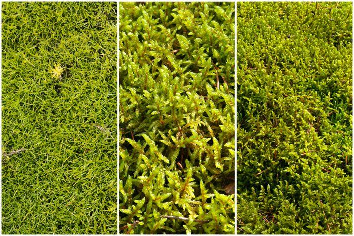 Pflanzen Texturen aus Blumen, Moos, Blatt, Baum und Gras (2)