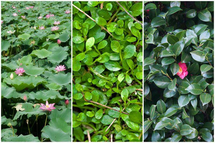 Pflanzen Texturen aus Blumen, Moos, Blatt, Baum und Gras (3)