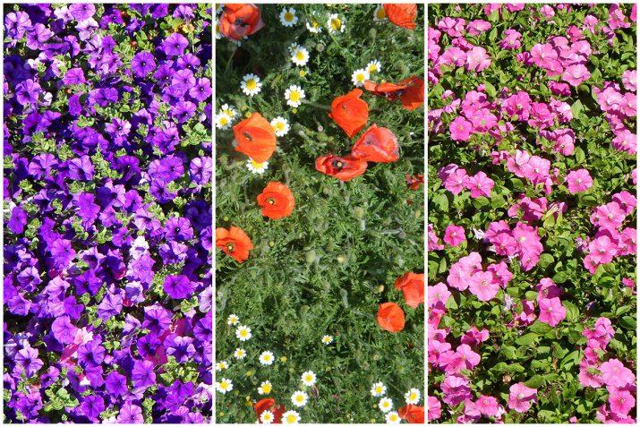 Pflanzen Texturen aus Blumen, Moos, Blatt, Baum und Gras (4)
