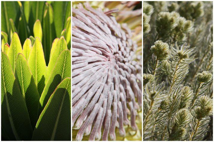 Pflanzen Texturen aus Blumen, Moos, Blatt, Baum und Gras (5)