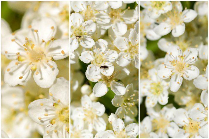 Pflanzen Texturen aus Blumen, Moos, Blatt, Baum und Gras (6)