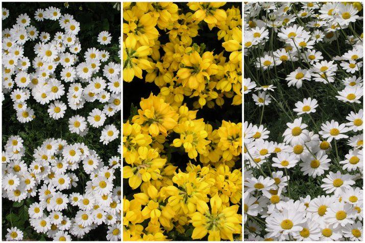 Pflanzen Texturen aus Blumen, Moos, Blatt, Baum und Gras (7)