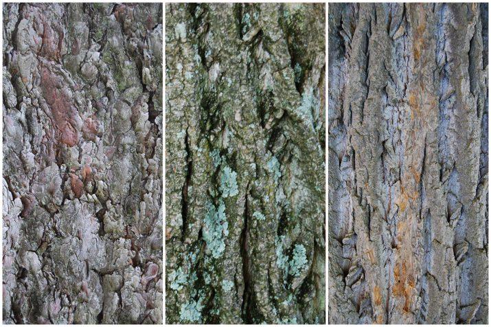 Pflanzen Texturen aus Blumen, Moos, Blatt, Baum und Gras (8)