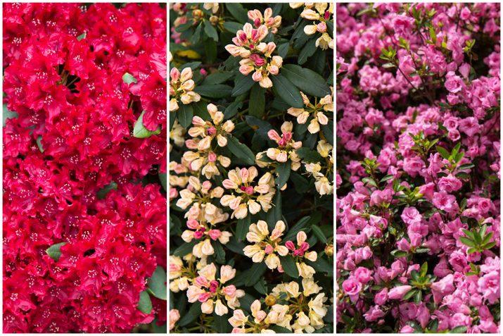 Pflanzen Texturen aus Blumen, Moos, Blatt, Baum und Gras (9)