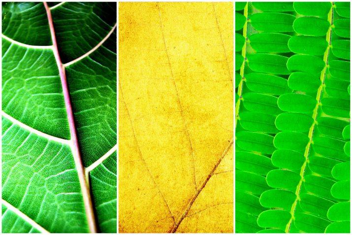Pflanzen Texturen aus Blumen, Moos, Blatt, Baum und Gras (10)