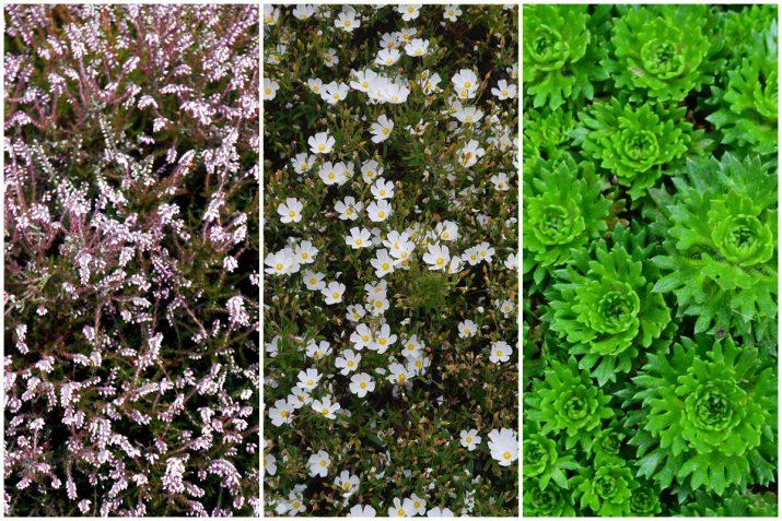 Pflanzen Texturen aus Blumen, Moos, Blatt, Baum und Gras (11)