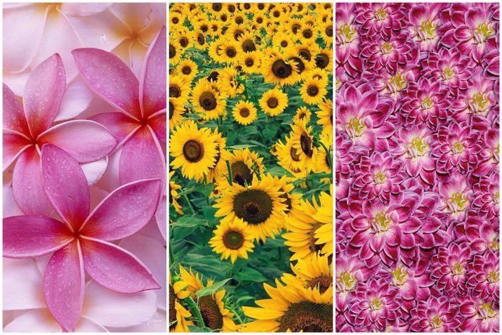Pflanzen Texturen aus Blumen, Moos, Blatt, Baum und Gras (12)