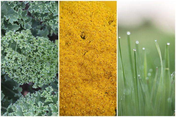 Pflanzen Texturen aus Blumen, Moos, Blatt, Baum und Gras (13)