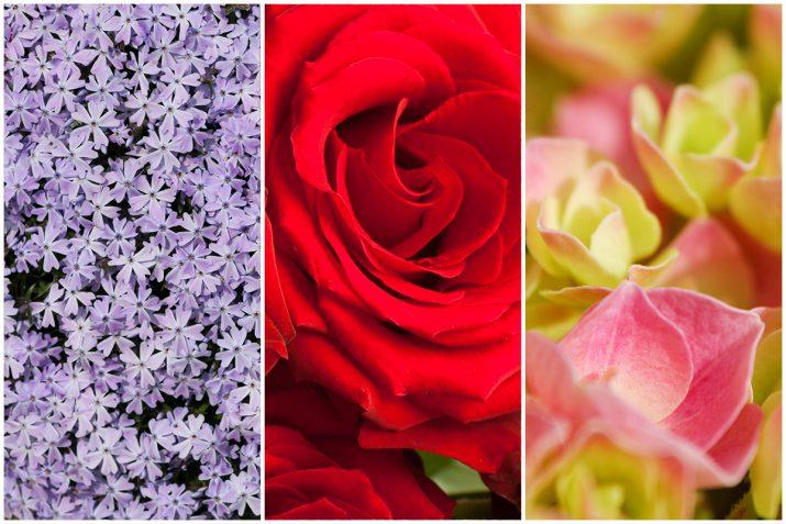 Pflanzen Texturen aus Blumen, Moos, Blatt, Baum und Gras (16)