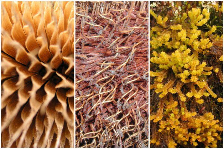 Pflanzen Texturen aus Blumen, Moos, Blatt, Baum und Gras (17)