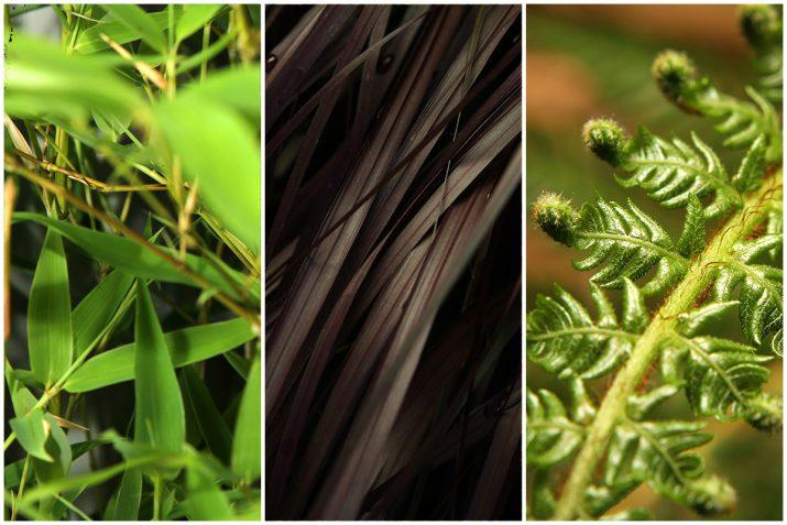 Pflanzen Texturen aus Blumen, Moos, Blatt, Baum und Gras (18)