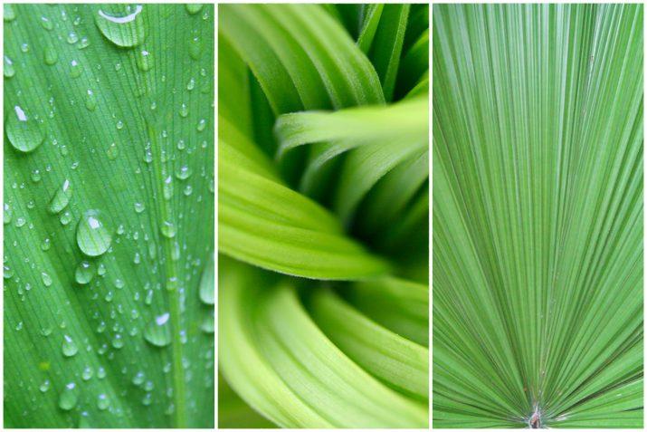 Pflanzen Texturen aus Blumen, Moos, Blatt, Baum und Gras (20)