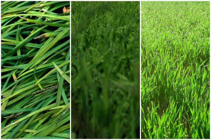 Pflanzen Texturen aus Blumen, Moos, Blatt, Baum und Gras (23)