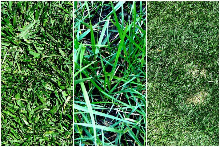 Pflanzen Texturen aus Blumen, Moos, Blatt, Baum und Gras (25)