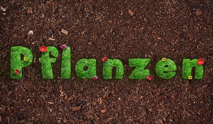 Frisch gepflückt – 25 Pflanzen- und Gras-Texturen